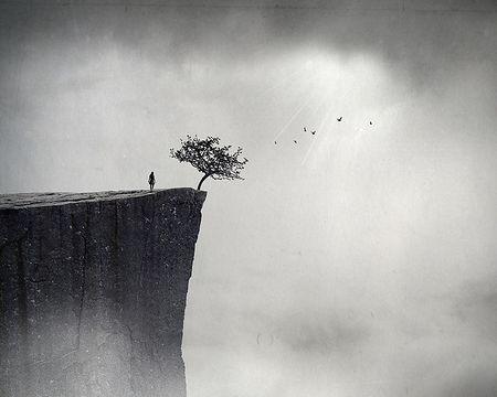 悬崖边的树