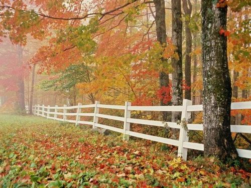 秋季养生保健