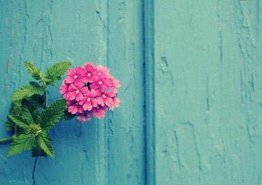对一朵花微笑
