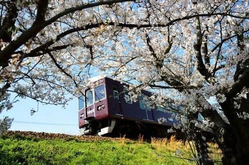 开往樱花的列车